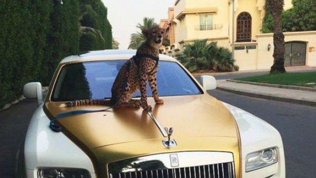 Leeuw wordt illegaal huisdier in Emiraten