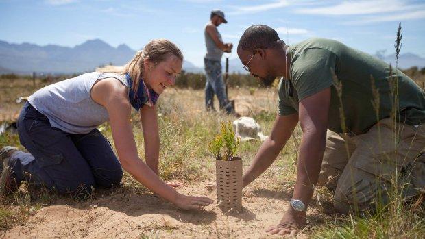 2,4 miljoen voor couveusebomen