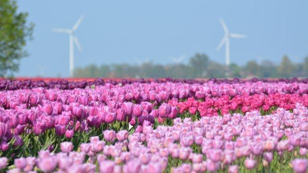 Nederlanders kiezen vaker voor groene stroom van eigen bodem