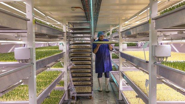 Nederland in top drie innovatiefste landen op voedselgebied
