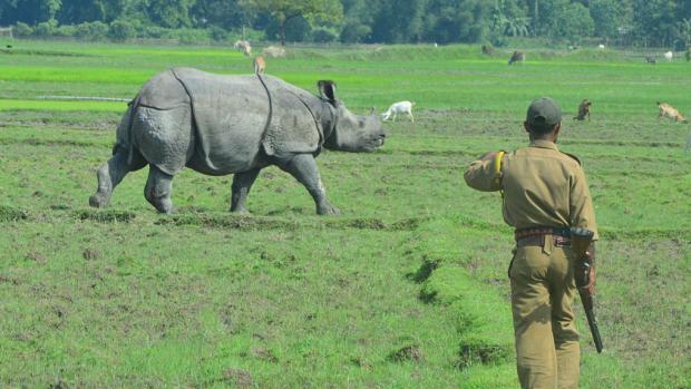 Grijze neushoorns en zwarte zwanen: hier zijn beleggers bang voor