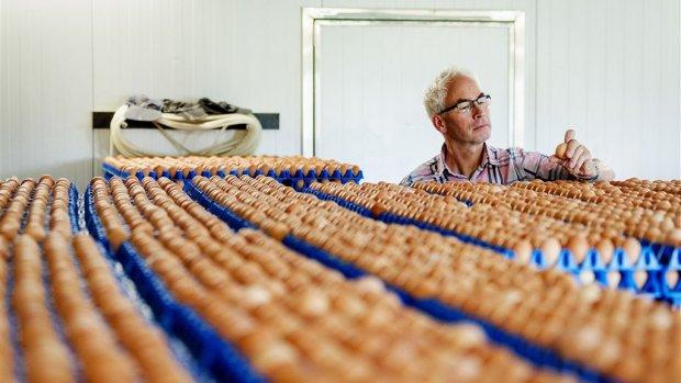 Getroffen werknemers pluimveesector krijgen hulp
