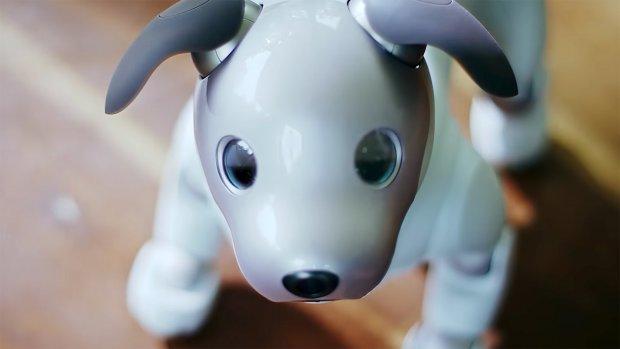 Grote vraag naar robothond Aibo, productie opgevoerd