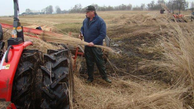 CDA wil molenaar, schaapsherder en rietsnijder redden