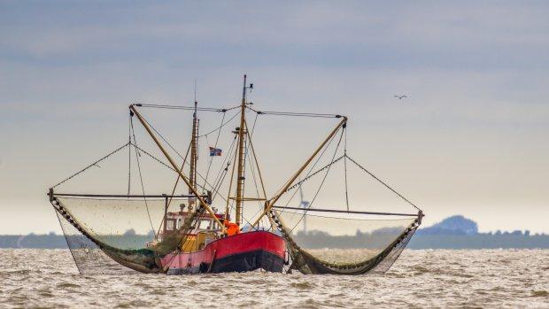 Zee barstensvol garnalen door warme zomer, prijs keldert
