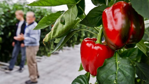 Aardwarmte moet paprika en tomaat van gas afhalen