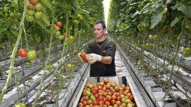 Growing Ideas - Tomatenkweker wil het verschil maken