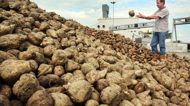 Suikerbietteelt gestegen: 'Goed voor boer en aarde'