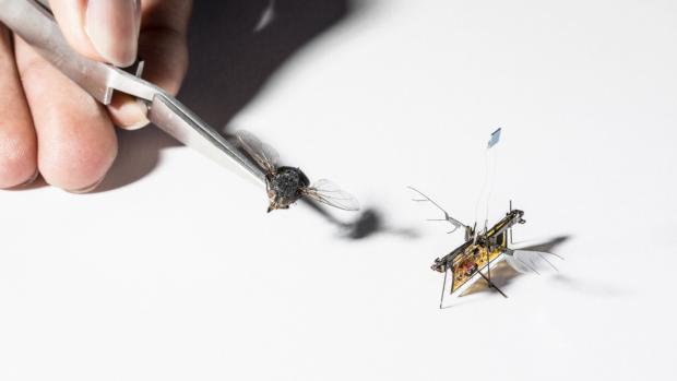 Dit robotinsect vliegt dankzij lasers