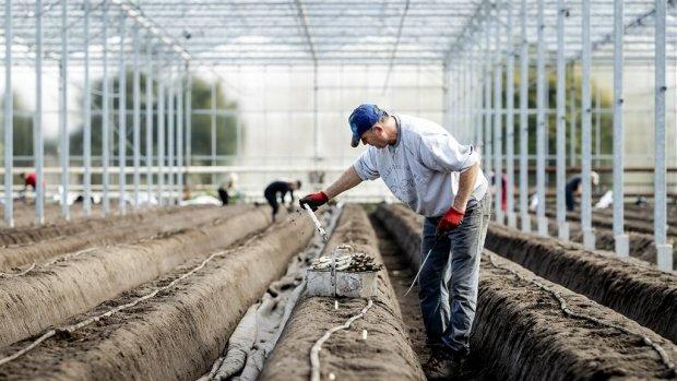 Nederland kan niet zonder arbeidsmigranten, vraag blijft toenemen
