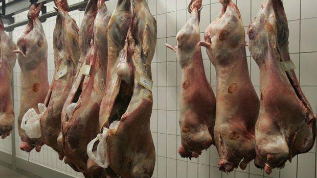Van Vollenhoven: 'Schandalig, dit is gewoon dierenmishandeling'