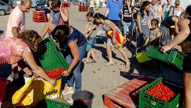 6 miljoen gratis tomaatjes in 1,5 uur weg