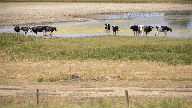 Extreem droog 2018 speelt boeren nu nog parten