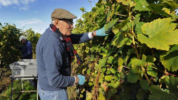 Noodweer op komst, wijnboer maakt zich geen zorgen