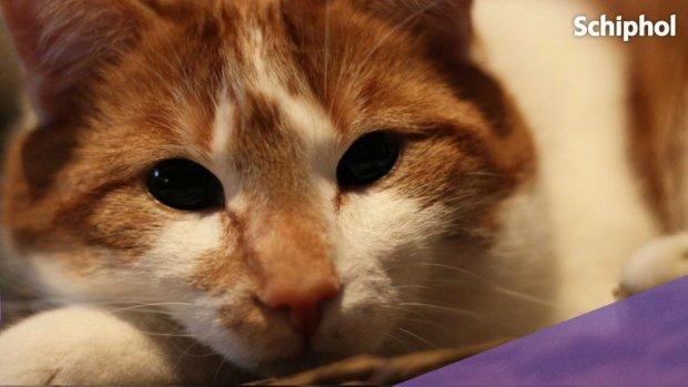 Schiphol roept hulp in om vermiste kat Mars te vinden