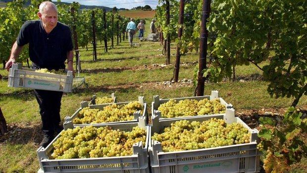 Limburgse wijnboeren slaags over naam van De Fromberg