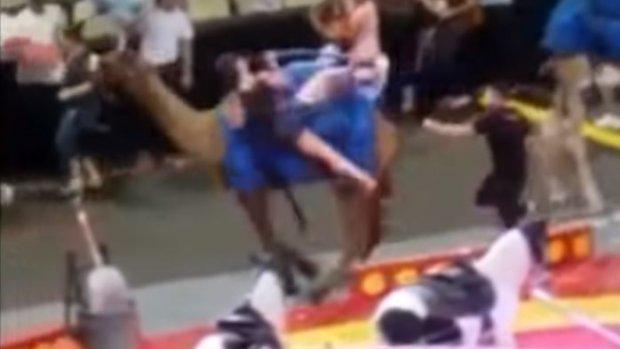 Circuskameel slaat op hol, kinderen gewond