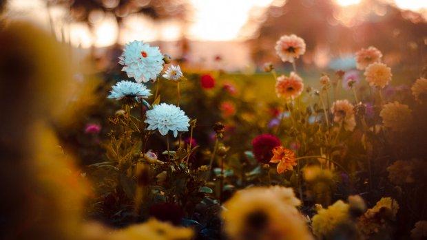 Drie herfstplanten die je tuin extra kleur geven...