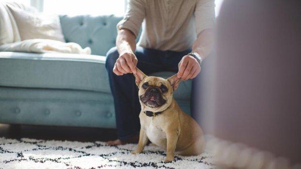 Het Hondenhuis: zou jij er gaan wonen?