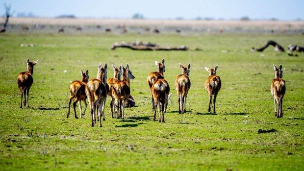 Afgeschoten herten mogelijk als hertenvlees over de toonbank