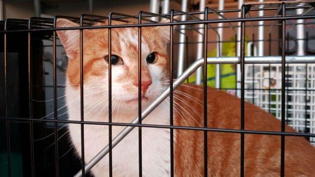 Kat Mars gevangen na weken zwerven op Schiphol
