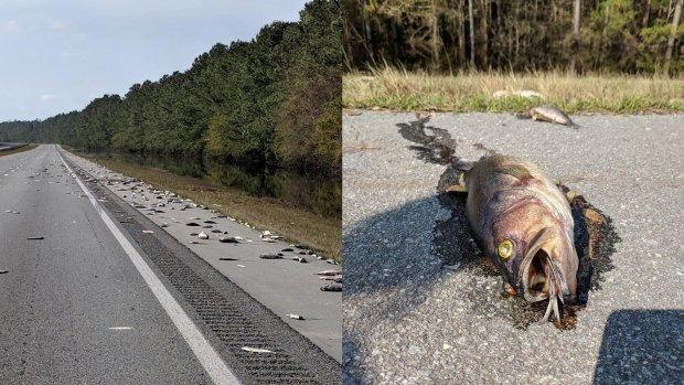 Honderden dode vissen op snelweg na orkaan Florence