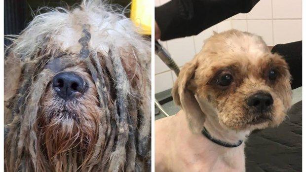 Zwaarvervuilde hond Bob verliest 1,3 kilo haar door knipbeurt