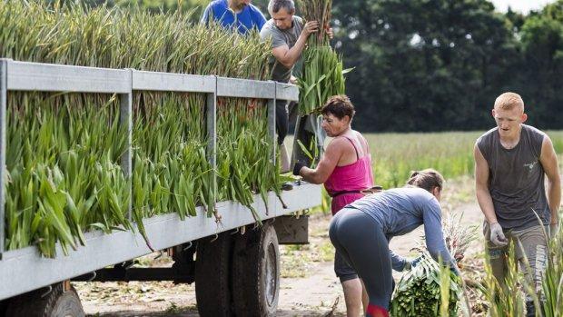 Grassen en bloemen: boeren en kwekers profiteren van nazomer