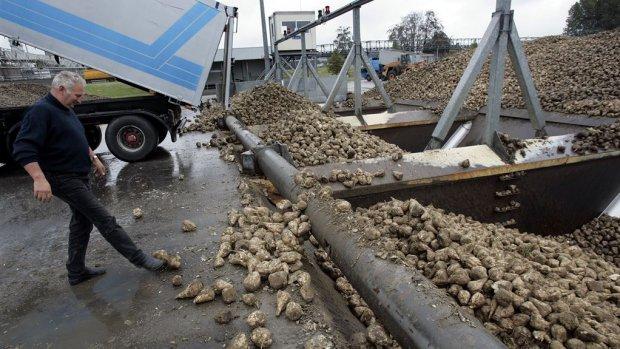 Historisch lage suikerprijs nekt paradepaardje van de akkerbouw