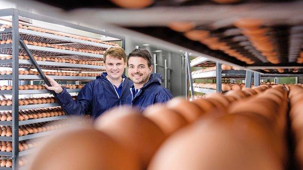 Miljoeneninvestering voor Nederlands bedrijf: vergassing eendagshaantjes binnenkort niet meer nodig