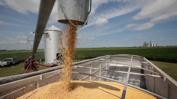 Handelsoorlog laat VS zitten met bergen rottende sojabonen