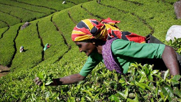 Eerlijk zaken doen zonder concessies: het is Sustainable Trade Week bij RTL Z