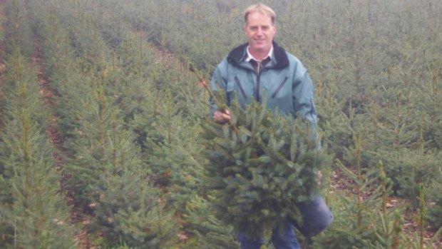 Topdrukte bij kerstbomenkwekers: 'Het is non-stop werken'