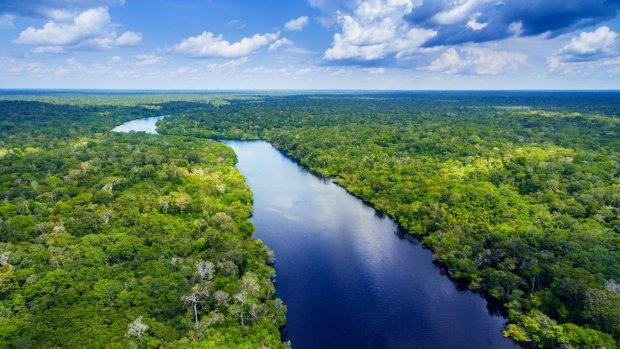 Minder ontbossing door duurzame handel
