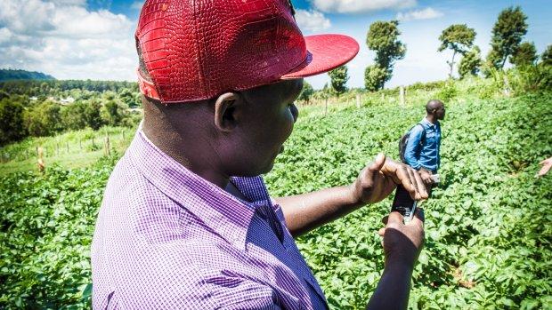 Afrikaanse boeren met  'blockchainrekening'