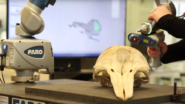 Digitale musea brengen dino-fossielen tot leven