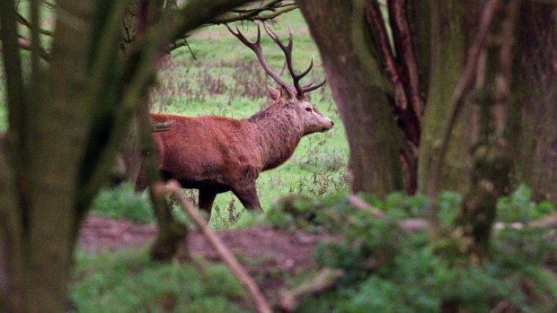 Poelier in Amsterdam gaat afgeschoten herten verkopen