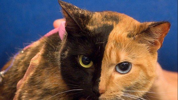 Eerste DNA-test voor katten te koop voor consumenten