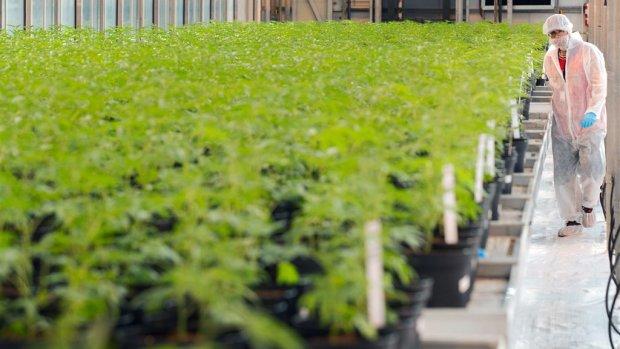 BV Nederland verdient 'honderden miljoenen' aan cannabismarkt
