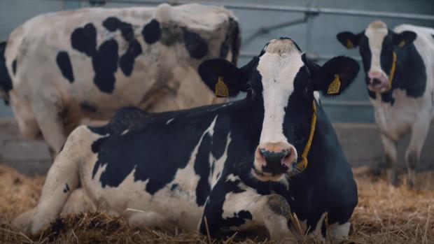 Koeien produceren naast melk ook data