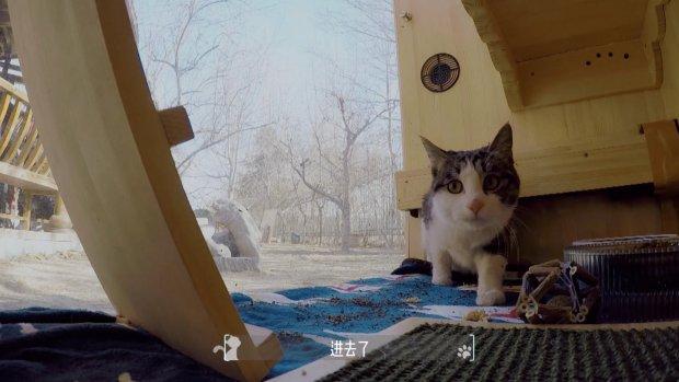 Schuilplaats voor katten laat dankzij AI geen honden binnen