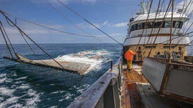 Weinig hoop op behoud pulsvisserij, gevolgen verbod 'desastreus'