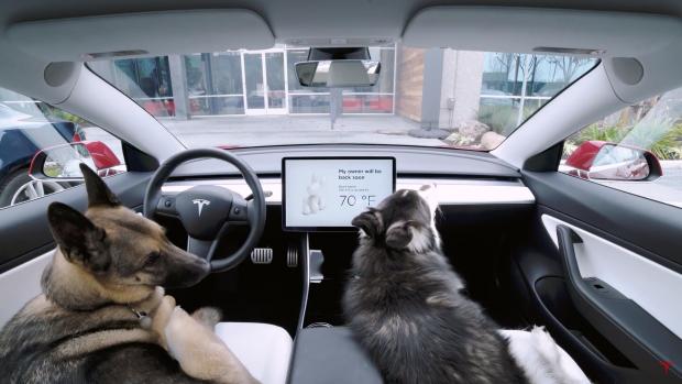 Tesla's nieuwe hondenmodus houdt viervoeters veilig