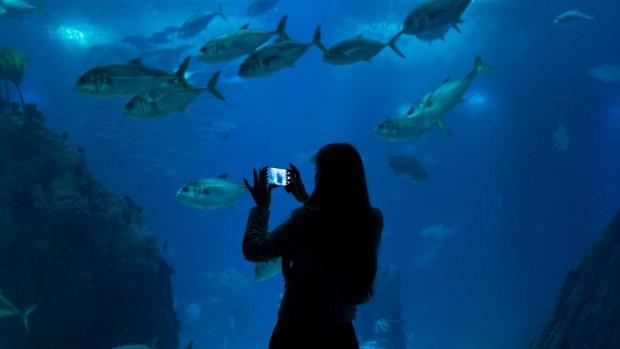 Huawei presenteert P30-smartphones eind maart