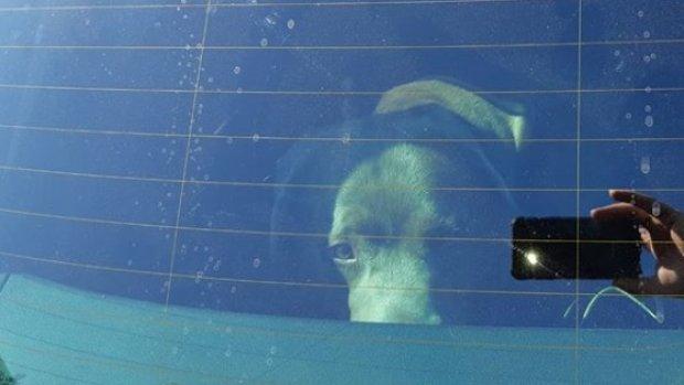 Politie redt hond uit bloedhete auto: 'Het gaat weer beginnen…'