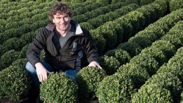 'Dolblij' met de buxusmot: Ronald kweekt lookalike van buxus