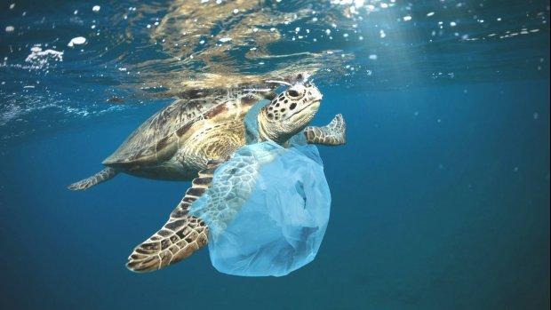 Plastic-etiquette op vakantie: plastic rietje kan echt niet meer