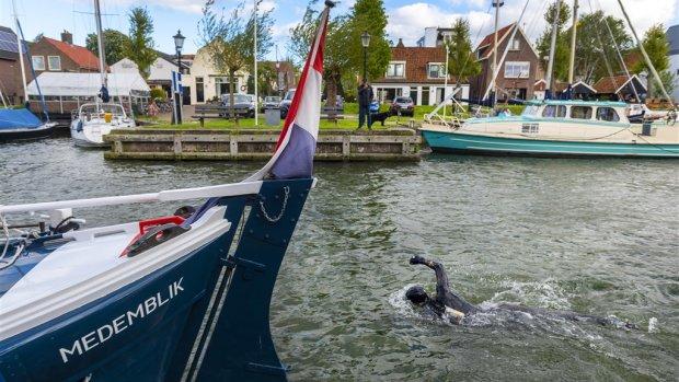 Maarten van der Weijden zwemt Elfstedentocht: de route en de doorkomsttijden