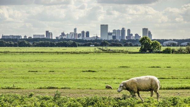 Stad versus dorp: waar voed je je kinderen op?