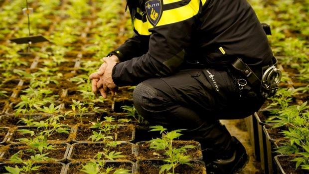 Wat als 'narcostaat' Nederland belasting heft op drugs?